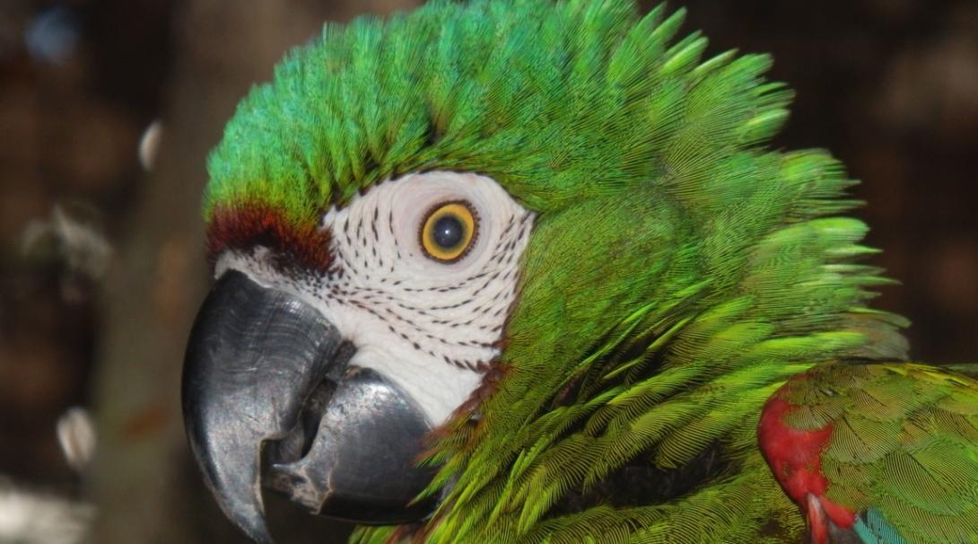 Save the Amazon rainforest in Peru.